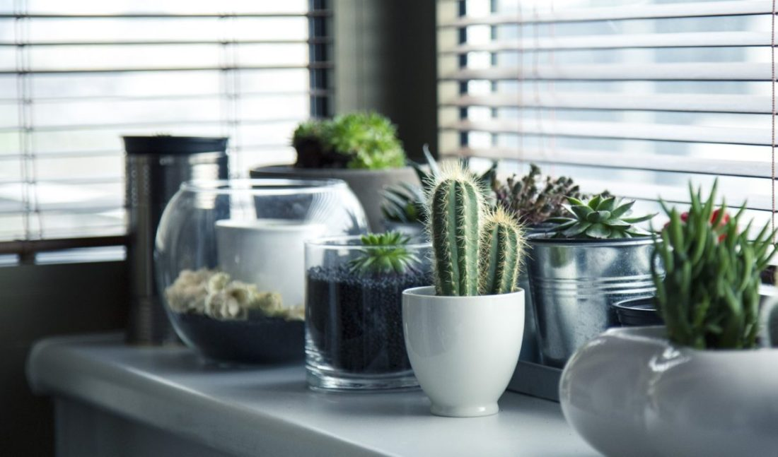 A picture showing a number of small potted cacti plants sat on glass shelves
